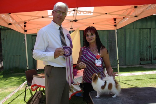 Fanie van der Linde Chihuahua Club Best In Show Judging