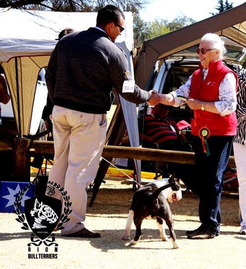 Rion Ricochet CHE RCC Best Puppy In Breed Best Puppy Terrier Group Bullterrier Brindle
