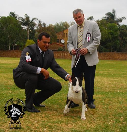 Rion Boudoir Ricochet Brindle Bullterrier Terrier Group winner judge Roy Gregg Ireland