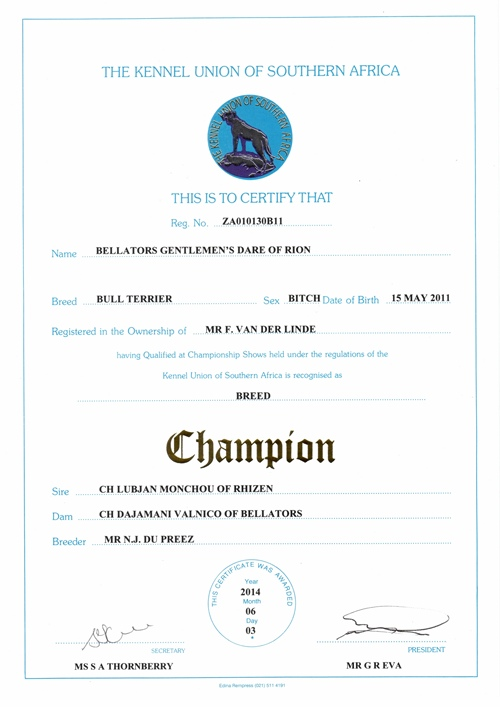 Ch Bellators Gentlems Dare of Rion Champion Certificate