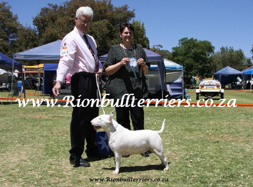 Rion bullterriers South Africa Champion Bitch Jane Rion Void Gentleman (3)