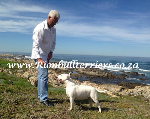 Rion bullterriers South Africa Champion Bitch Jane Rion Void Gentleman (6)