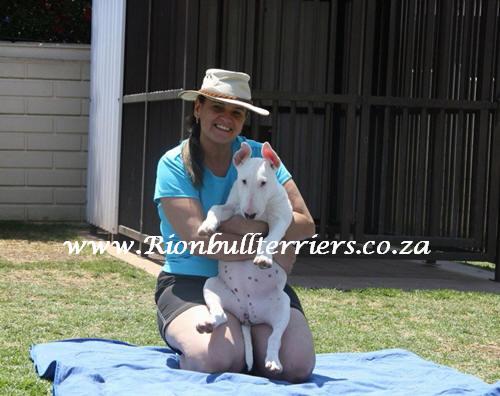 Rion Bullterriers SA JHB