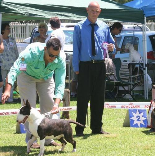 Rion Boudoir Ricochet CHE winning BIG under terrier judge Adie Austen Sharrazar Stafordshire Bullterriers