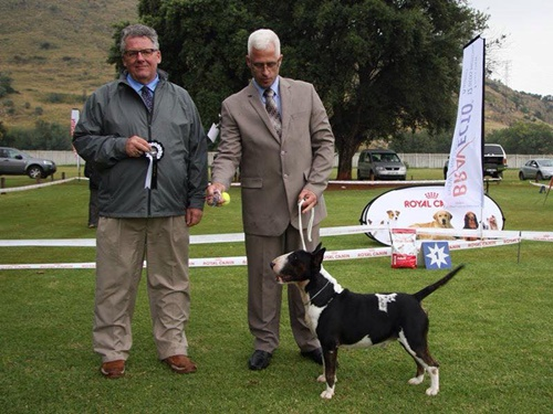 Ch. Domino Devil of Rion winning terrier Group 1st under Judge Grant Townsend Canada
