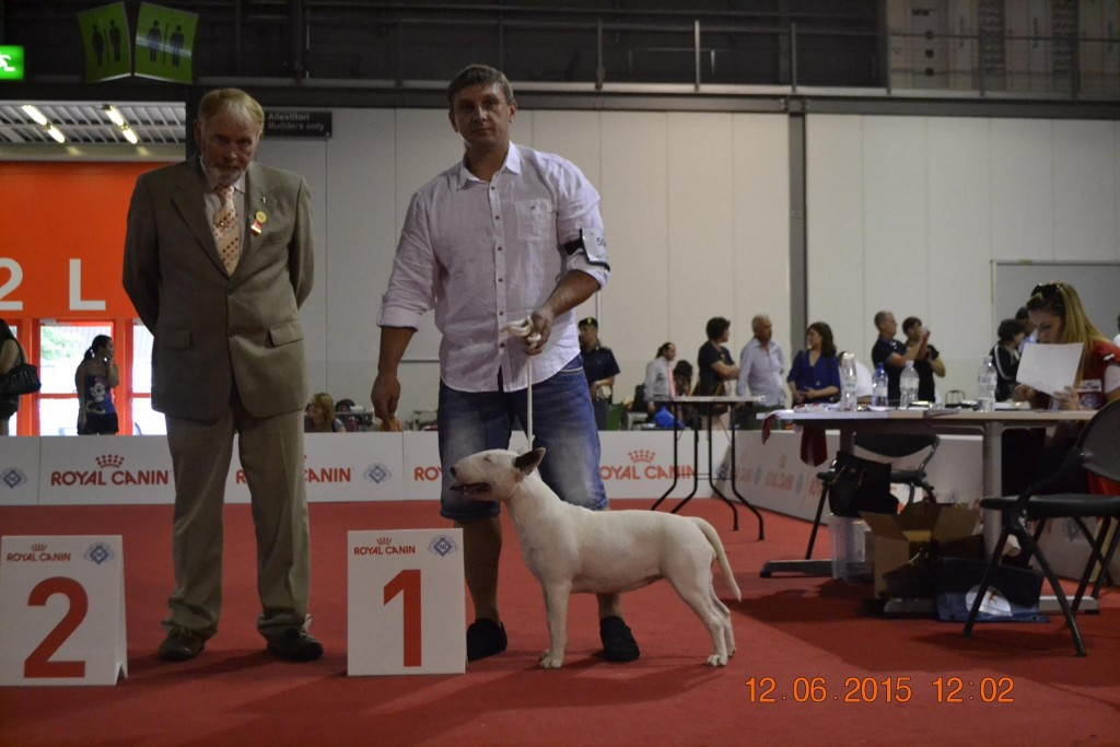 Rion Double Infinity - World Dog Show - Milan - Italy - Bullterrier
