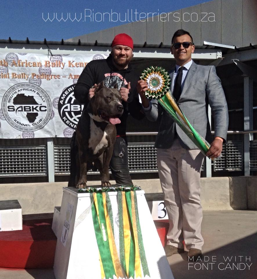 SABKC championship show - American Bully Show - Best In Show - Judge - Rion van der Linde