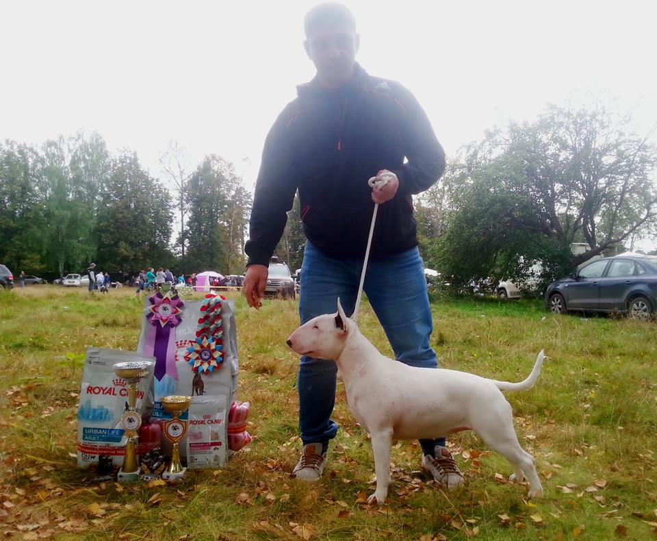 Rion Double Destiny -  BEST IN SHOW WINNER -White bitch -  Rion Bullterrier Kennel South Africa