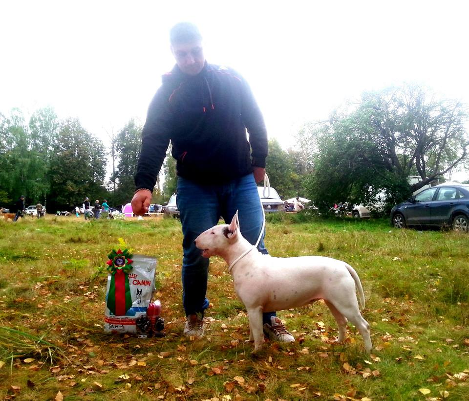 Rion Double Infinity - Club Winner - Best Female - White Bitch - Rion Bullterrier Kennel South Africa