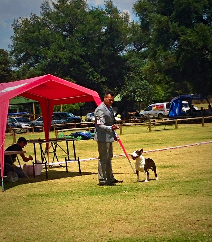 CH. Rion Boudoir Ricochet - Terrier Group Winner