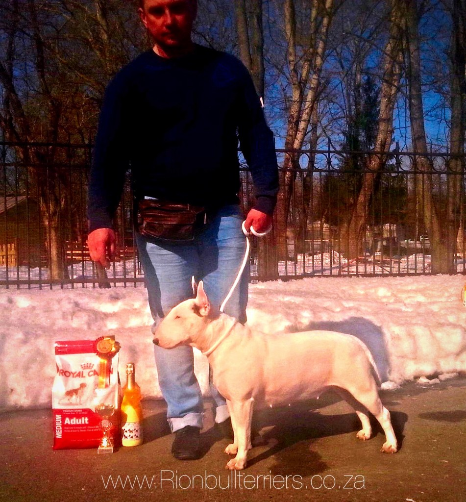 Rion Double Infinity - Champion Class Winner - White Bitch Bullterrier