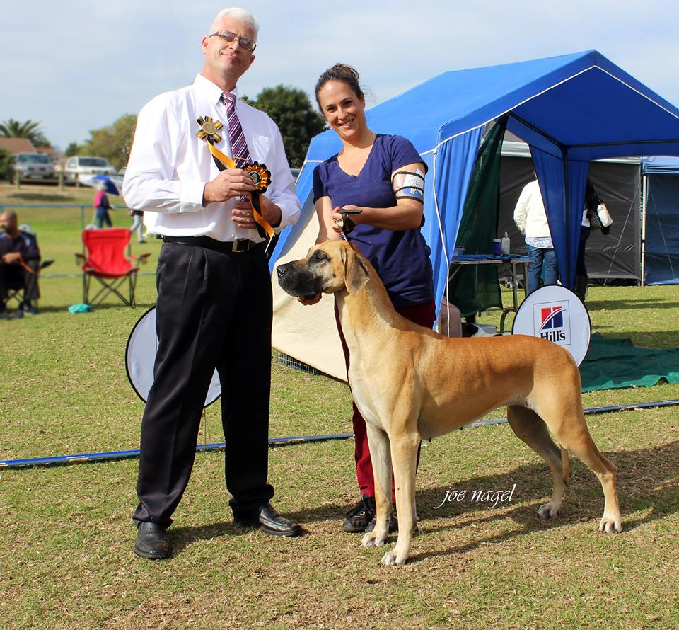 Judge - Working Group Winner Great Dane - Fanie van der Linde