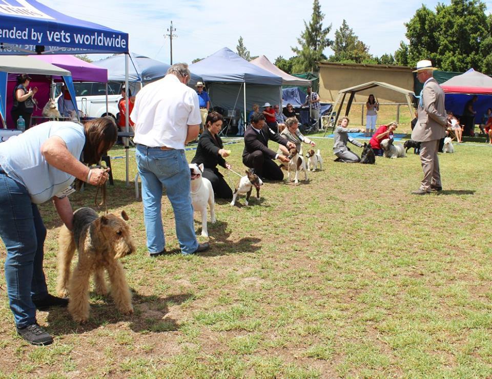 Fanie van der Linde - Terrier group Judge - Cape Town 2017