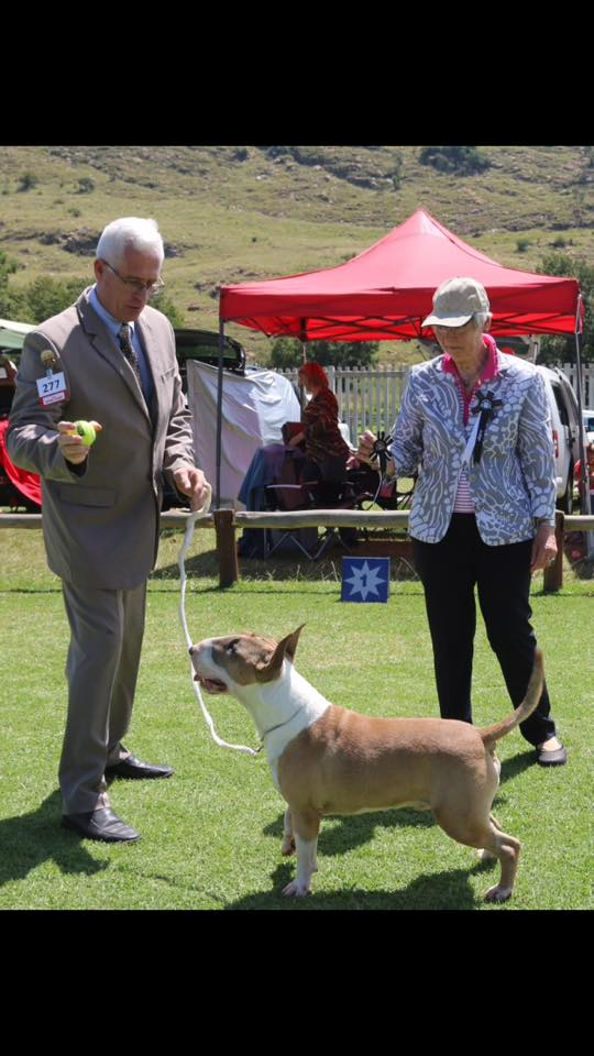 Remington winning Best In Terrier Group under judge H.J. Jensen (Denmark)